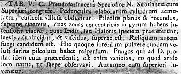Amanita battarrae, description from Battarra's Fungorum Agri... (1755).  [photocopy]
